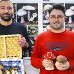 Foto del gruppo Mushrooms on web
