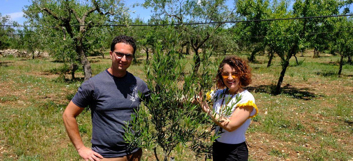 """Copertina del post """"Dalla Puglia al Veneto, andata e ritorno con l'olio extravergine di oliva"""""""
